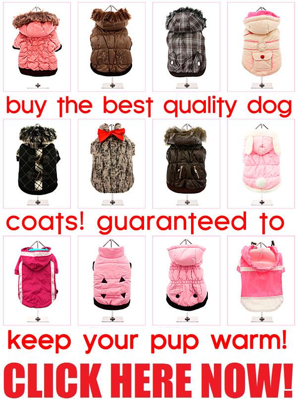 og coats guaranteed to keep your pup warm