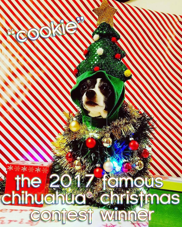 winner chihuahua christmas tree picture contest