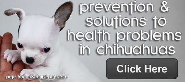 health problems in chihuahuas