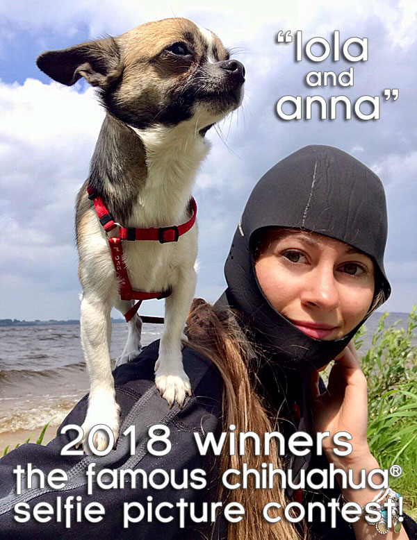winners famous chihuahua selfie picture contest