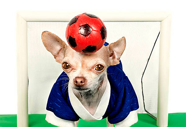 chihuahua world cup soccer