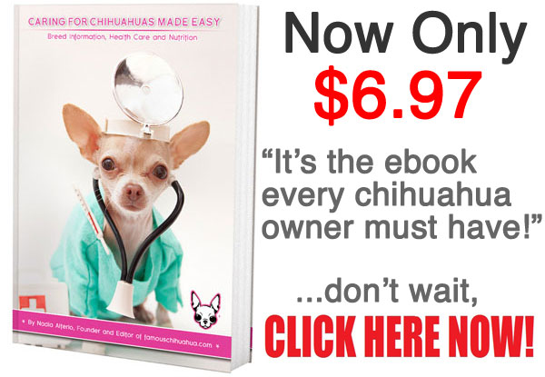 chihuahua care book