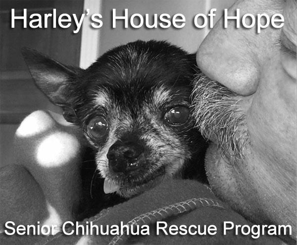 harley's house of hope, senior rescue program