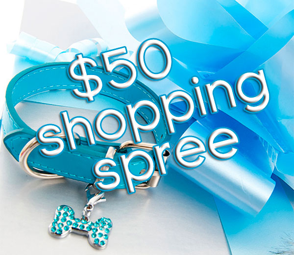 win a $50 shopping spree for your chihuahua!