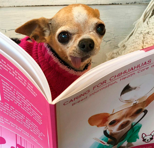 caring for chihuahuas made easy eBook