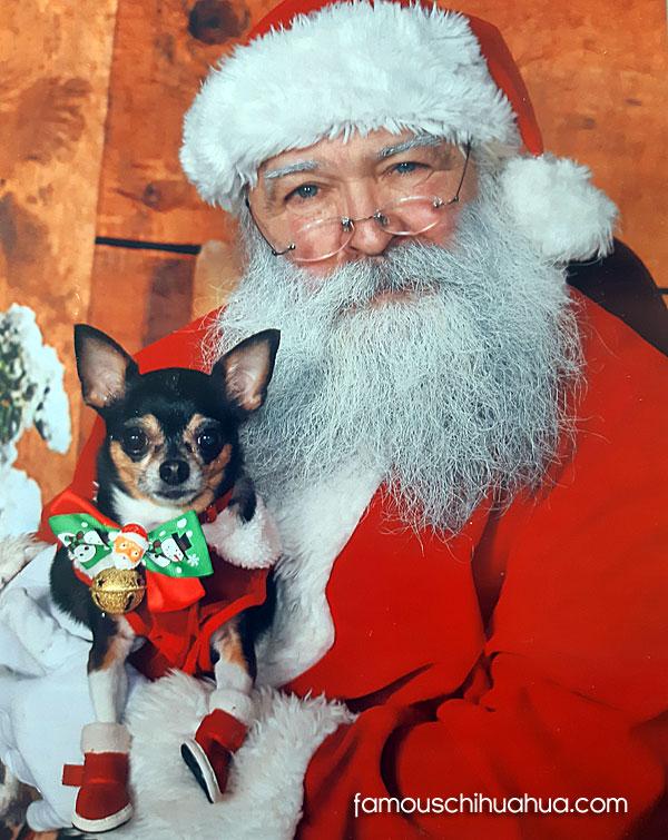 chihuahua and santa