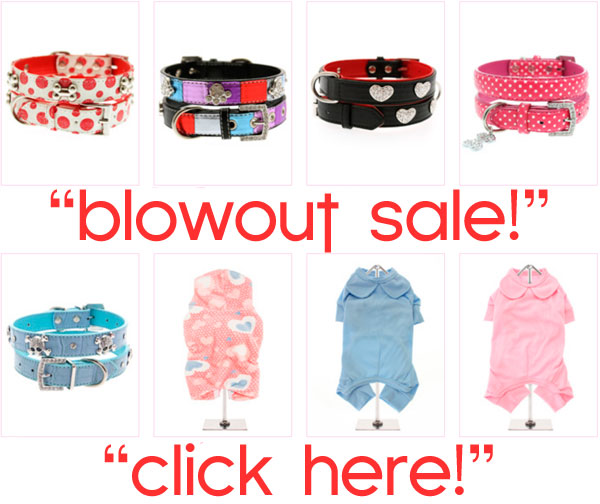 blowout clearnace sale chihuahua clothes accessories