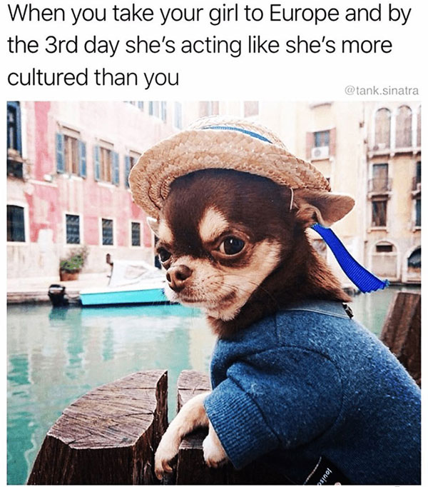 funny chihuahua mime